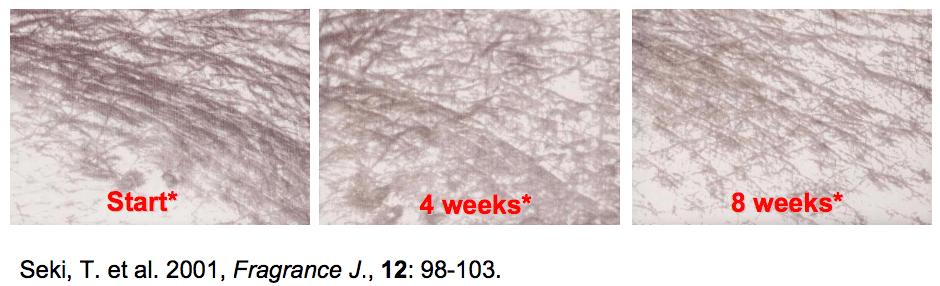 การทดลอง Seki วัดผลที่ 8 สัปดาห์