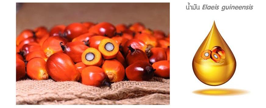 สารสกัด Elaeis guineensis จากผลปาล์มชั้นดี