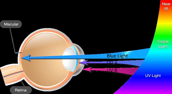 แสงสีฟ้าจากหน้าจอ ทำลายประสาทตาโดยตรง